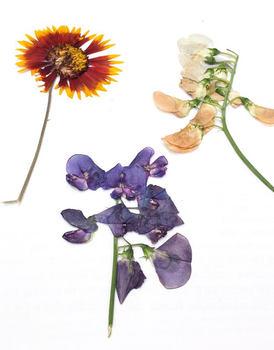 Jak lisovat květiny